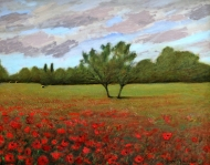 Poppy Fields, Tuscany